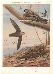 NIGHTHAWK, CHIMNEY SWIFT by Louis A Fuertes, vintage print authentic 1932