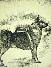 Cleanthe Norwegian Elk Hound 1933 Dog Art Print Matted