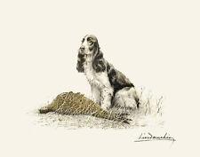 Danchin Leon Setter With Pheasant Print 11 x 14    #3721