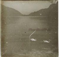 Lac Con Dei Cygnes c1910 Foto Stereo Placca Da Lente VR12hd