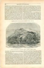 Anémone de mer Gastéropode Oursin Moules Etoiles de Mer Méduse GRAVURE 1849