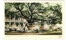 Biloxi Miss MS -OLD OAK TREE AT HOTEL DE MONTROSS- Postcard