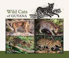 Guyaa 2018  fauna wild cats of Guyana I201901