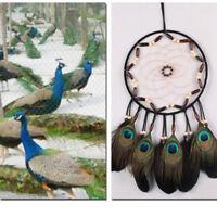 Dream Catcher Net Peacock Feather Handmade Wall Hanging Decoration Car Ornament