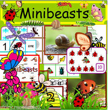 MINI BEASTS Early years teaching resources on CD  EYFS, minibeasts, childminder