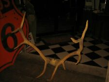 🦌Vintage Authentic Real Large Elk Antlers Taxidermy Mount Home Decor Log Cabin