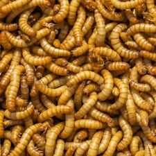 60g mealworms