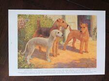 1935 vintage original Magazine Illustration Dogs Of The World - Irish Terrier