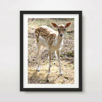 DEER ANIMAL WILDLIFE PHOTOGRAPHY ART PRINT Poster Home Decor Wall Nature Picture
