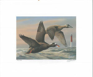 RW63 1996 FEDERAL DUCK STAMP PRINT SURF SCOTERS by Will Goebel Lighthouse