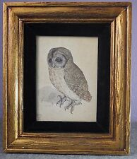 Albrecht Durer Owl canvas print giclee 8X12/&12X17 art reproduction poster