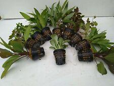 10 Töpfe Aquarienpflanzenset Wasserpflanzen 2,90€/Stk . ideal für den Anfänger