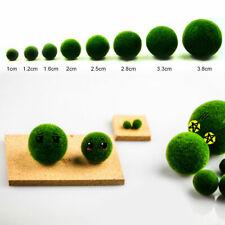 Green Seaweed Ball Moss Live Aquarium Plant Fish Ornament Decoration Supplie Us