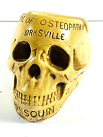 Antique chalkware Skull Ashtray Osteopathy School Kirksville Missouri MO medical