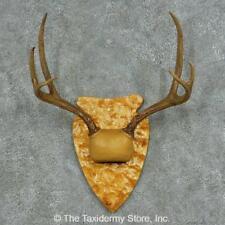 #13683 N | Mule Deer Antler Plaque Taxidermy Mount