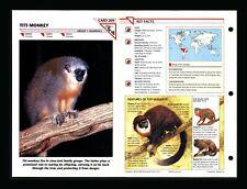 Titi Monkey Wildlife Fact File Mammal Animal Card Home School Study 1.209