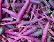 Purple Carrot Vegetable Seeds Carrot Seeds 1,000 BULK SEEDS