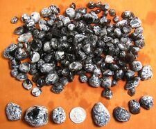 100+ Apache Tears (Obsidian) - Teacher Special