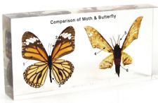 Comparison of Moth & Butterfly embedded  resin paperweight Collection Specimen
