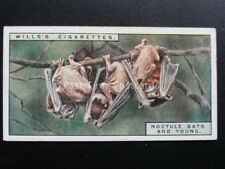 No.2 NOCTULE BATS AND YOUNG - Life in the Tree Tops - W.D.& H.O.Wills 1925