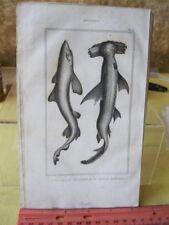 Vintage PRINT,FISH,1836,Comte De Lacepede, p1090
