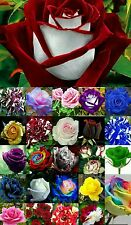 Rose flower seeds rare 25 types seeds - (5 seeds each) - Total 125 seeds