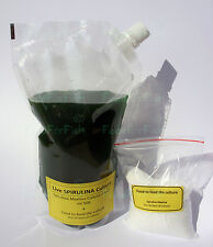 Spirulina Maxima Live starter ml 500 + fertilizzante X 50 litri Inoculo coltura