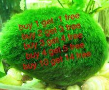 Marimo Moss Balls (5cm) Live Plant Aquarium Tank In USA