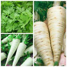 Seeds Parsley Leaf Gigantella Root Sugar Hercules Herb Organic Heirloom Ukraine