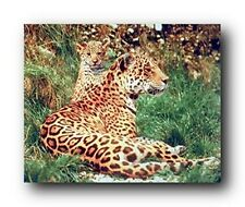 Leopard with a Baby Wildlife Animal Wall Decor Art Print Poster (16x20)
