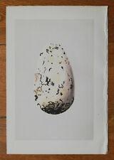 Original Print Bird Nest Egg Great Auk Egg by Morris - 1875