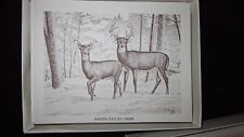 Season Greeting White-Tailed Deer Note Cards with 10 Note Cards & 10 Envelopes