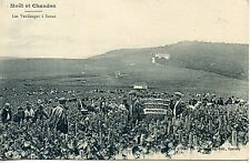 CARTE POSTALE / REIMS / CHAMPAGNE / MOET ET CHANDON LES VENDANGES A SARAN