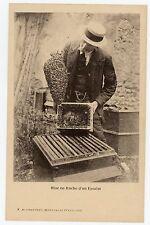 CARTE POSTALE apiculture Beekeeping mise en ruche  essaim ALPHAUDÉRY Montfavet