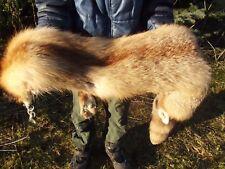 REAL RED FOX FUR PELT SKIN Taxidermy