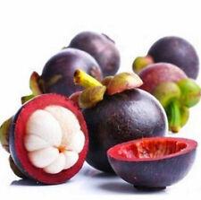 Mangosteen SeedsNutrient-Rich Queen Of Tropical Fruits Seeds 10PCs ♫