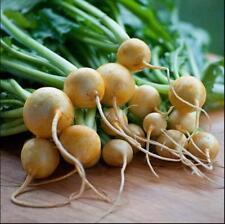 20pcs vegetable Seeds Golden Globe Turnip