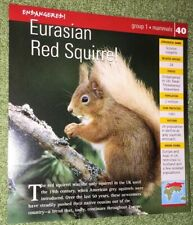 Endangered Animals Card - Mammal - Eurasian Red Squirrel #40