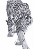 TIGER Prowling Ltd Edit art drawing print  2 sizes A4/A3 & card available