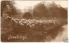 OLD PHOTO POSTCARD PC Sturgis MI Flock Of Sheep 1912