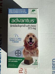 Advantus Flea Soft Chews 37.5 mg Large Dogs 23-110 Pounds 7 Chews Exp 23