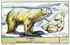 6 Cards c1955 Bears Polar bear Black Gray Bear Honey Bear Brown Panda Kinkajoe
