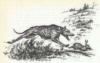 GREYHOUND / WHIPPET - 1964 Dog Art Print - MATTED
