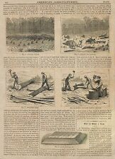 OLD 1873 CLEARING TIMBER LAND LOGGING ARTICLE & ILLUSTRATIONS