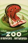 Antwerpen Belgium Anvers Zoo Hippo Vintage Poster Print Retro Style Art Decor