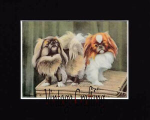 The Pekinese Dog -  From paintings by Louis Agassiz Fuertes