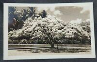 Coastal Landscape Palm Trees Vintage RPPC Postcard (Unposted)