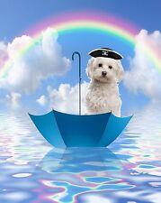 Blue White Home Decor Wall Art Maltese Dog Rainbow Seascape Photo Print with Mat