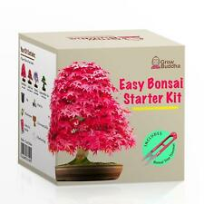 Grow Your Own Bonsai Tree Beginners Growing Seed Starter Kit 4 Types Of Trees