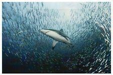 Shark & School of Fish Swim in the Ocean, Star of Jaws? - Modern Animal Postcard